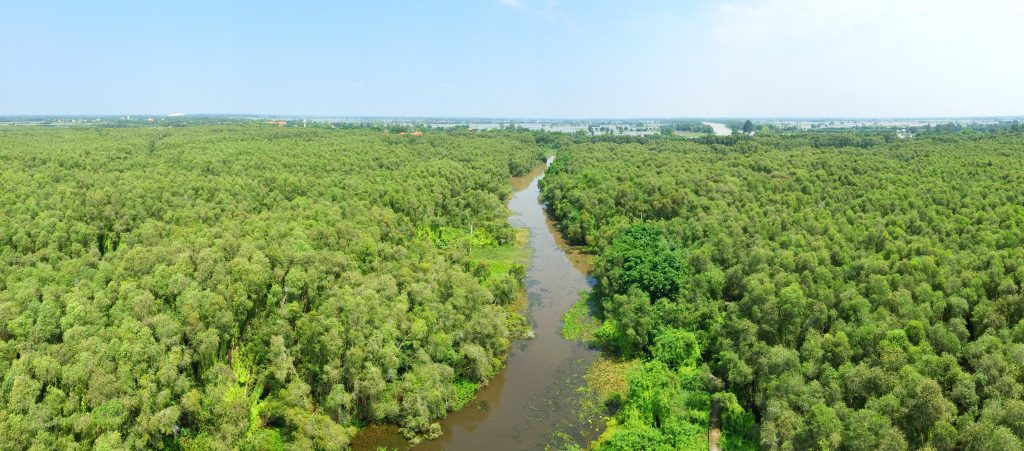 The Melaleuca forest in Tan Lap floating village, Long An