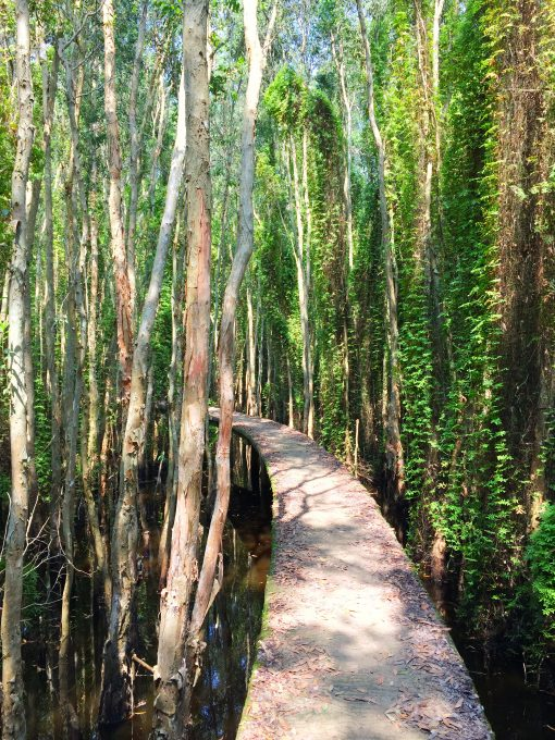 the 'road of love' inside Melaleuca forest in Tan Lap floating village, Long An