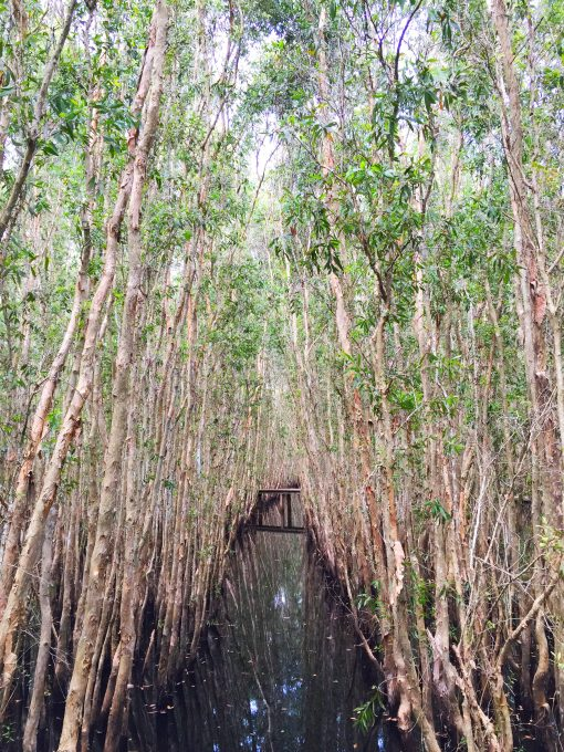 The Melaleuca trees in Tan Lap floating village, Long An