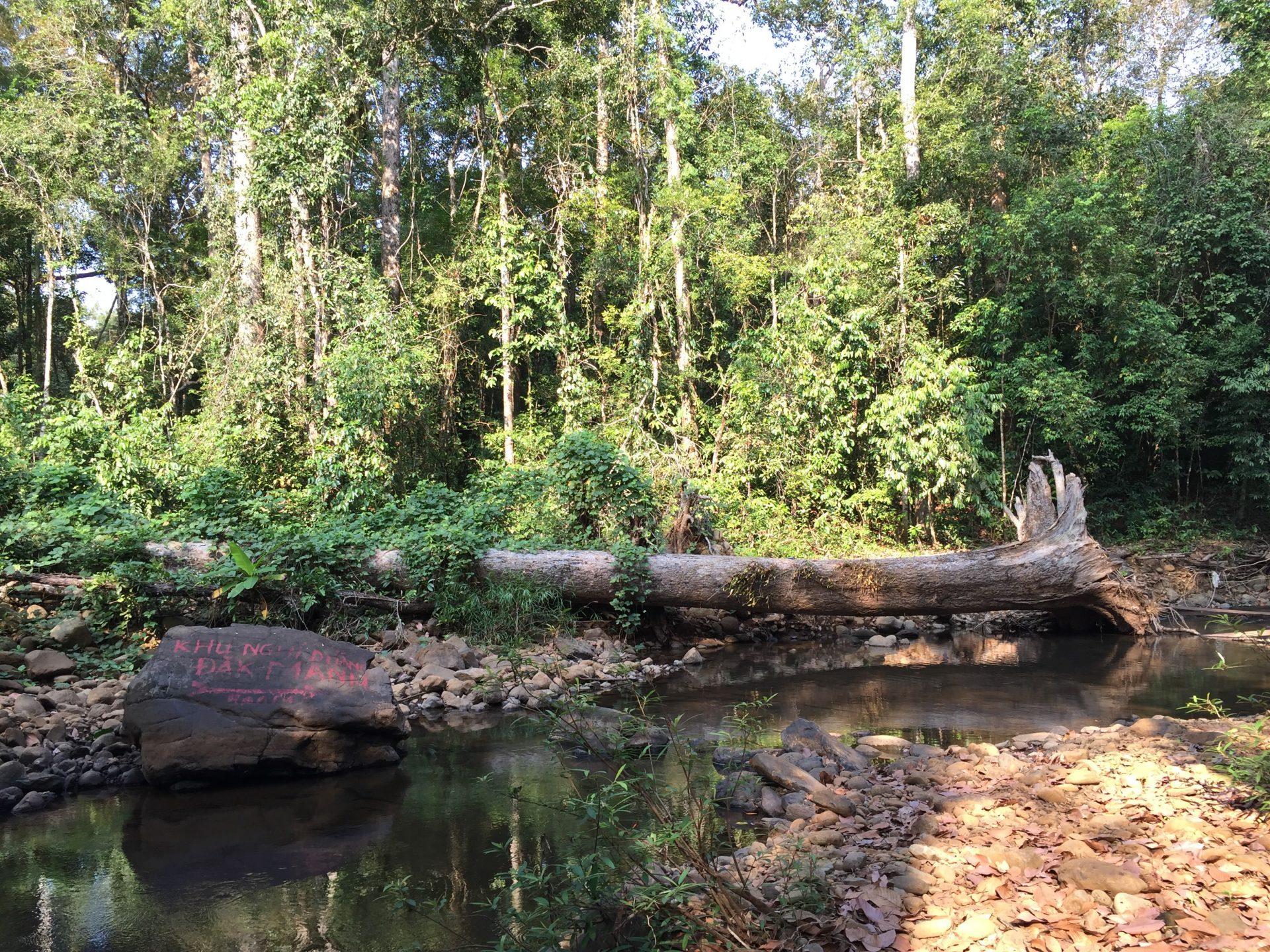 tree-stone-bugiamap-nationalpark-thebroadlife-stream-vietnam