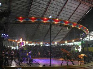 Tiger show at Tiger Zoo in my trip Bangkok and Pattaya