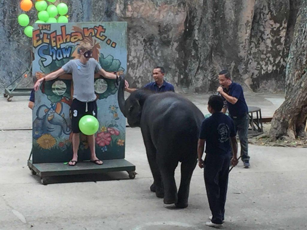 Elephant at Tiger Zoo visited in my trip Bangkok and Pattaya