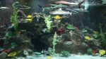Sharks and fishes in Vinpearl Land Aquarium, Phu Quoc Island, Vietnam