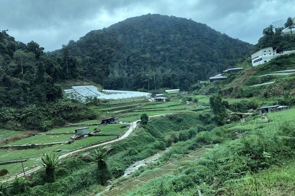landscape at Cameron Highlands, Malaysia