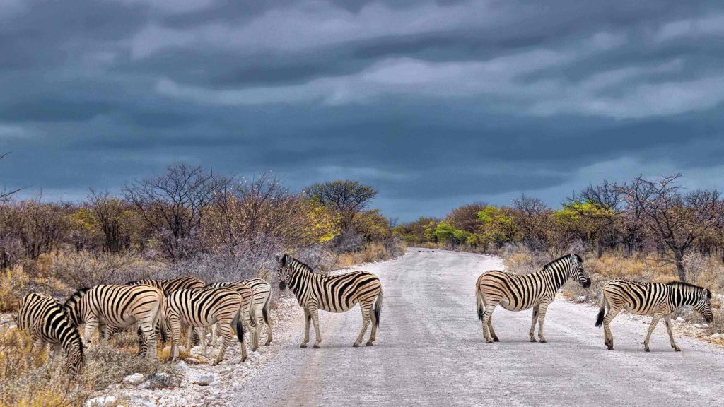 Wild zebra in Namibia's wildlife parks, among the epic places in the world to travel