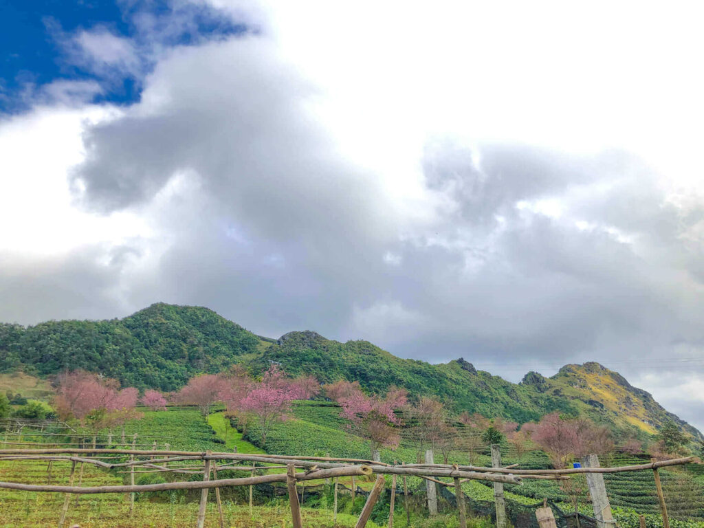 Cherry Plum Garden in Sapa