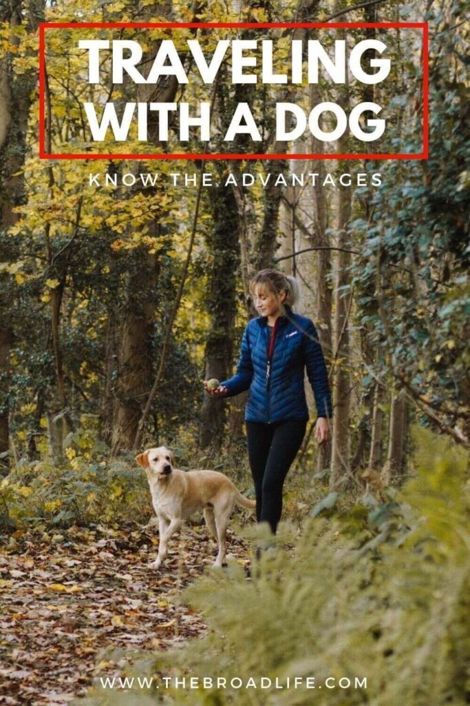 advantages of traveling with a dog - The Broad Life's Pinterest Board