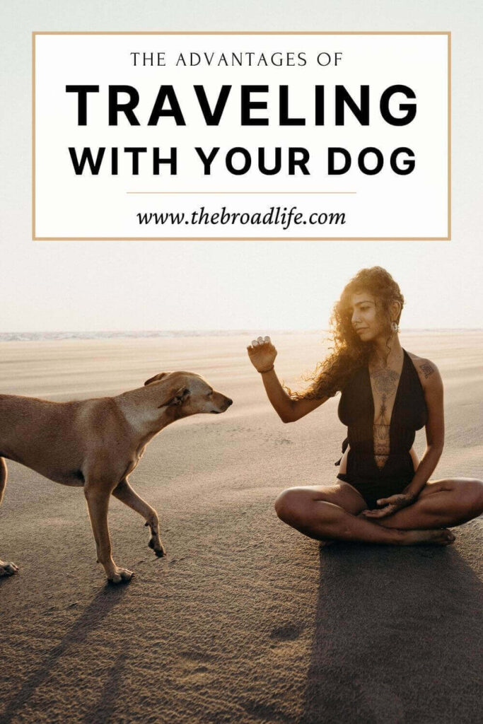 advantages of traveling with your dog - The Broad Life's Pinterest Board