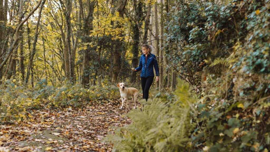 explore areas with a dog