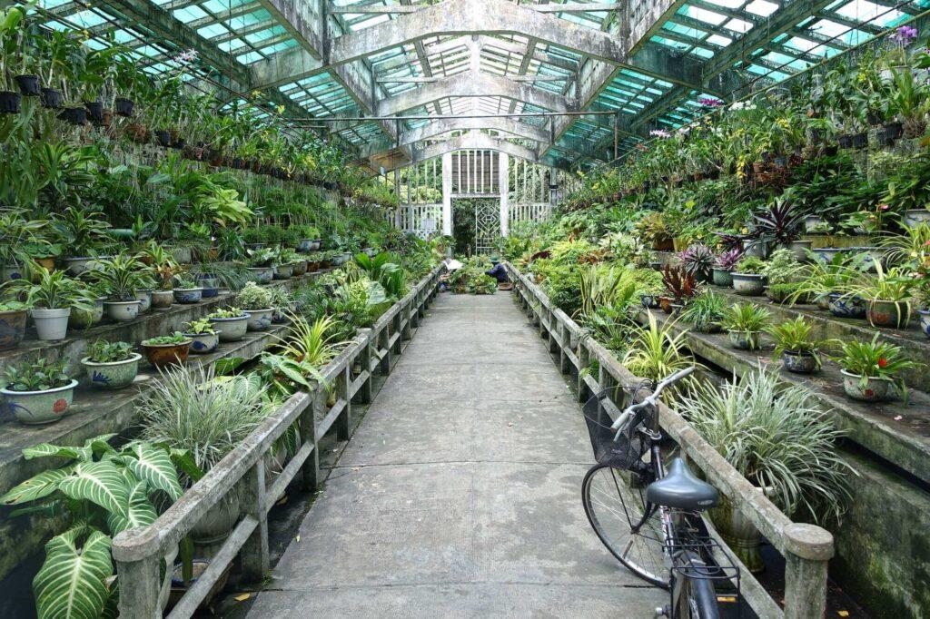 orchid house interior of saigon zoo and botanical gardens