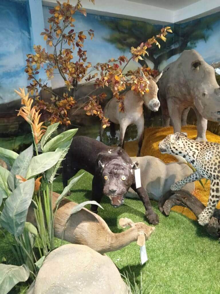 Sculptures of animals inside the museum