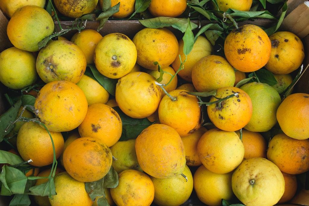 orange fruit Cam Xoàn with orange skin is best for eating